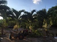 Cần bán 17.100 m2 đất ở, đất nhà xưởng - Bà Rịa Vũng Tàu