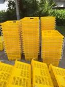 Chuyên cung cấp sọt nhựa rỗng Thanh Long HS011 Phú Hòa an
