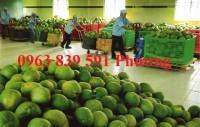 Bán rổ nhựa lớn đựng bưởi giá cạnh tranh 0963839591